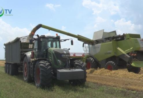 Zajlik az aratás